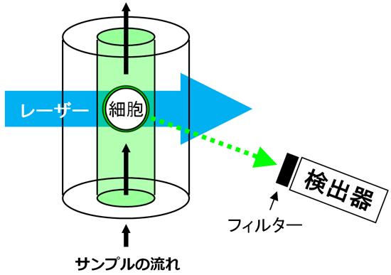 フローサイトメーターの原理